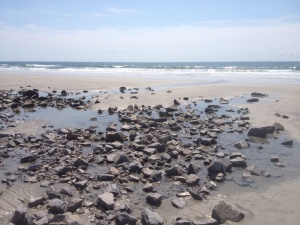 Hunt for sand dollar on bird island reserve and beach